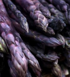 Asparagus officinalis 'Pacific Purple'